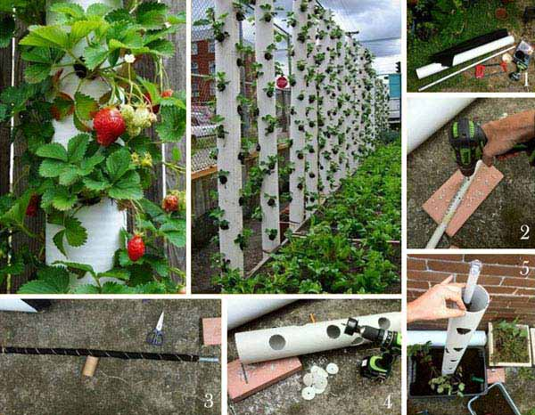 24 Highly Creative and Clever Gardening Tricks to Enhance Garden homesthetics decor (7)