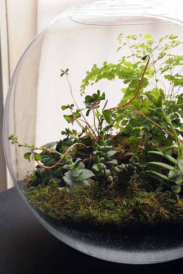 25+ Smart Miniaturized Indoor Garden Projects That You Would Really Love homesthetics decor (13)