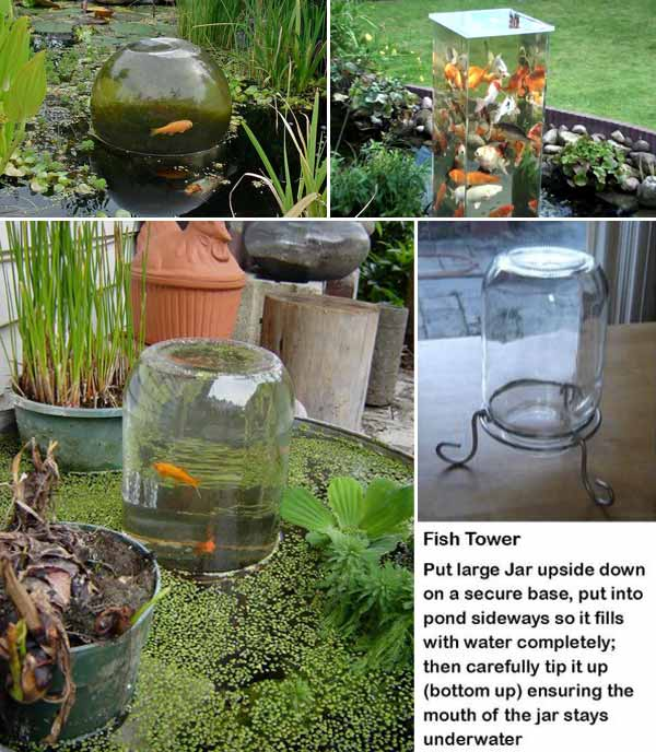21 small garden backyard aquariums ideas that will for Best fish for small pond