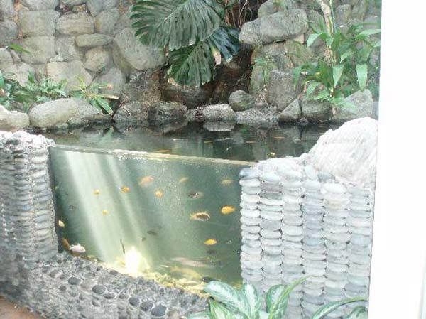 Small Garden Backyard Aquariums Ideas That Will