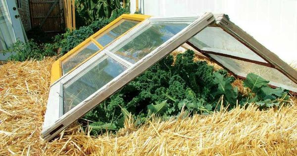 Learn How to Build a Green House With This 7 Tutorials and Transform Your Backyard homesthetics decor (1)
