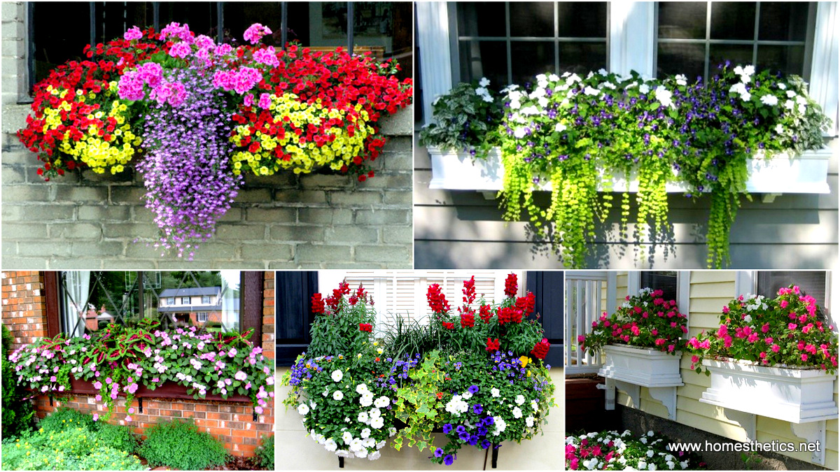 19 Simply Breathtaking Flower Box Ideas To Accessorize Windows With Greenery