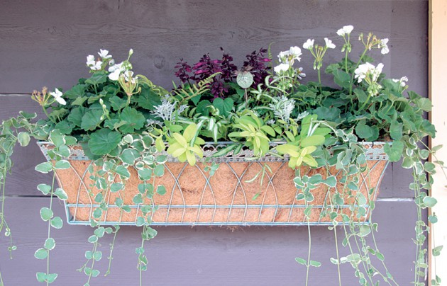 19 Simply Breathtaking Flower Box Ideas to Accessorize Windows With Greenery homesthetics flower decor (17)
