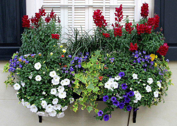 19 Simply Breathtaking Flower Box Ideas to Accessorize Windows With Greenery homesthetics flower decor (18)
