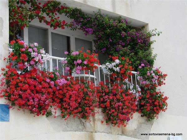 Inspiration Pack Containing 23 of the World`s Most Beautifully Flowered Balcony Gardens homesthetics decor ideas (12)