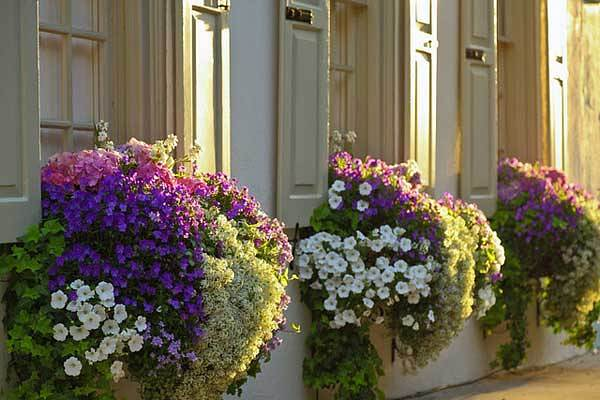 Inspiration Pack Containing 23 of the World`s Most Beautifully Flowered Balcony Gardens homesthetics decor ideas (16)