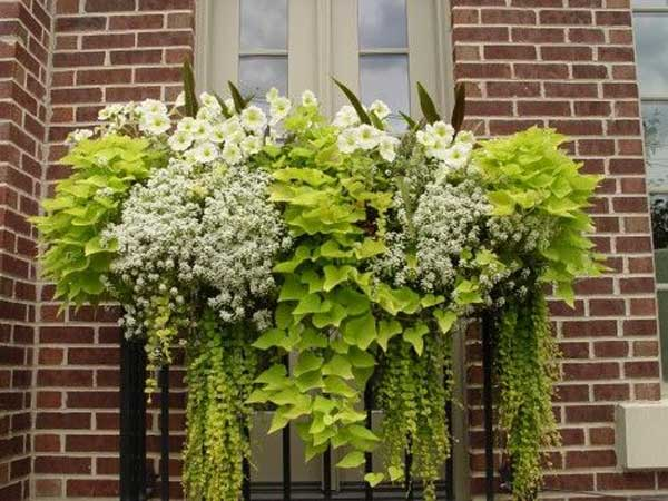 Inspiration Pack Containing 23 of the World`s Most Beautifully Flowered Balcony Gardens homesthetics decor ideas (18)