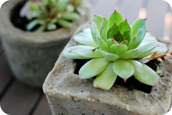 21 DIY Inspiring Ideas for Planters That Will Make Your Plants Happy homesthetics decor (7)