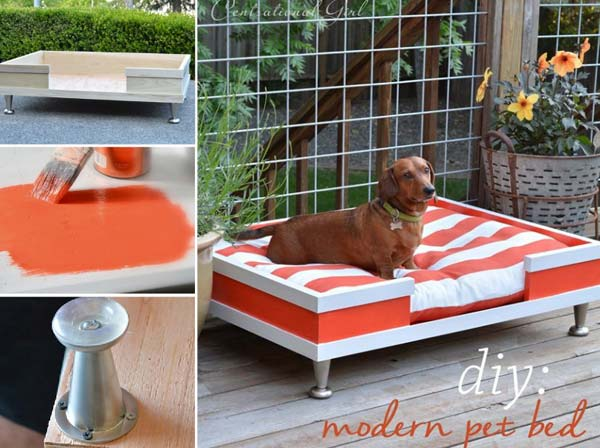 20 DIY Pet Craft Projects That Will Change The Life of Your Furry Friends homesthetics diy projects for pets (10)