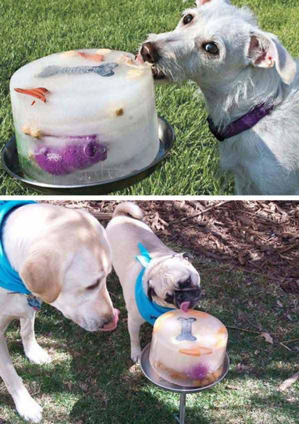 20 Diy Pet Craft Projects That Will Change The Life Of