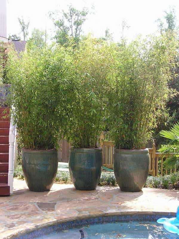 Potted Screen Realized With BAMBOO - 22 Simply Beautiful Low Budget Privacy Screens For Your Backyard