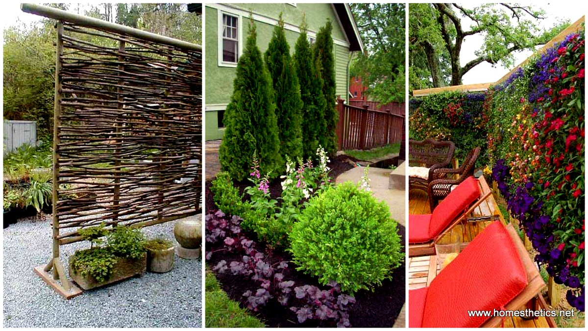 22 simply beautiful low budget privacy screens for your for Backyard patio privacy ideas