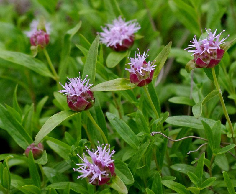Improve Your Outdoors Experience With Mosquito Repelling Plants-homesthetics.net (2)