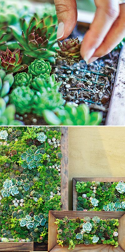 Transform Any Corner Into A Green Heaven With Creative Gardening Projects-homesthetics.net (16)