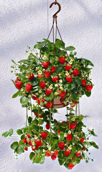 Transform Any Corner Into A Green Heaven With Creative Gardening Projects-homesthetics.net (2)