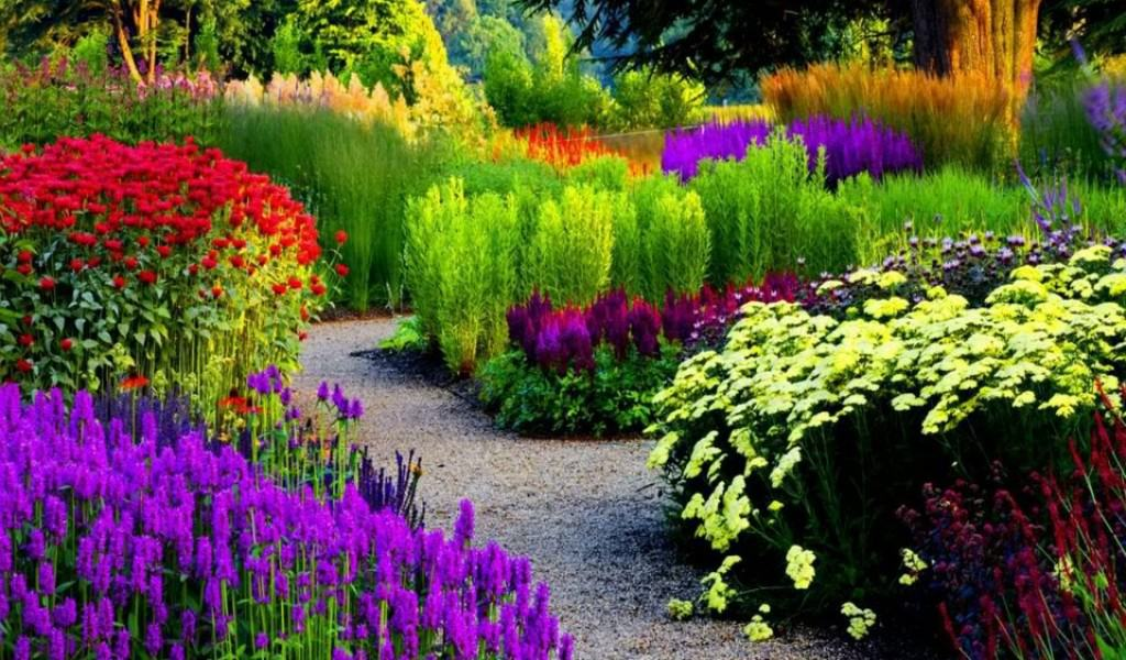 #12 Designed Flower Garden Blooming A Variety Of Multicolored Flowers Photo