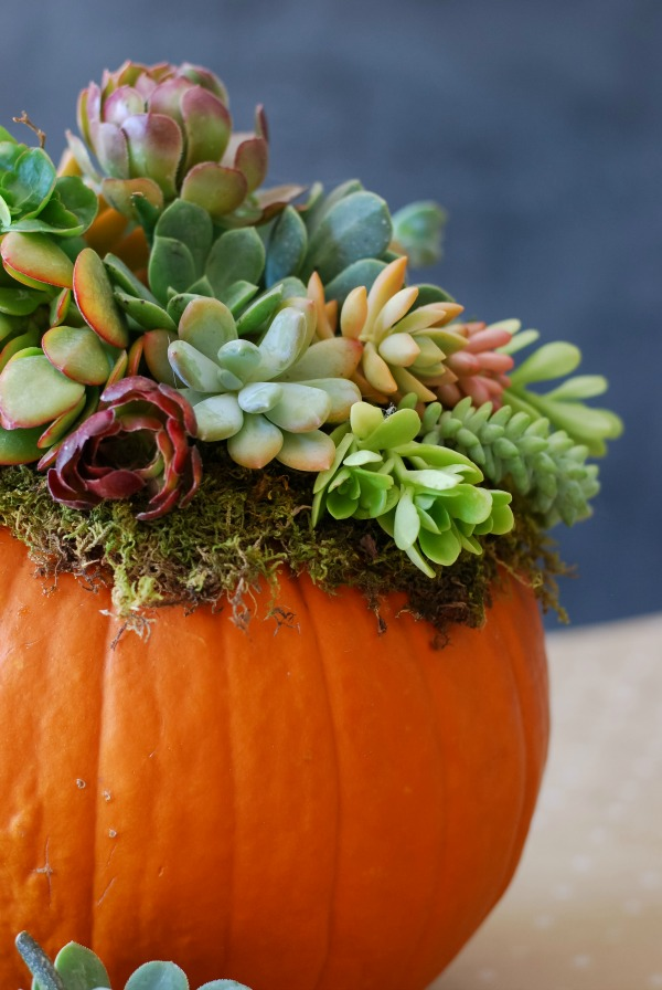 23+ Insanely Beautiful Thanksgiving Centerpieces and Table Settings homesthetics decor ideas (17)
