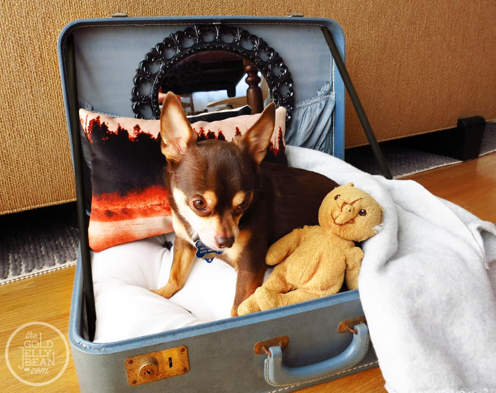 25 Beautifully Creative Ways to Recycle Vintage Suitcases at Home homesthetics decor (8)
