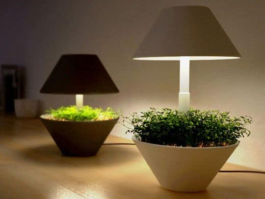30 Awesome Indoor Garden Planting Projects To Start In The New Year (12)