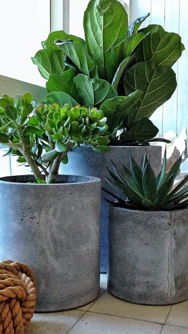 30 Awesome Indoor Garden Planting Projects To Start In The New Year 16