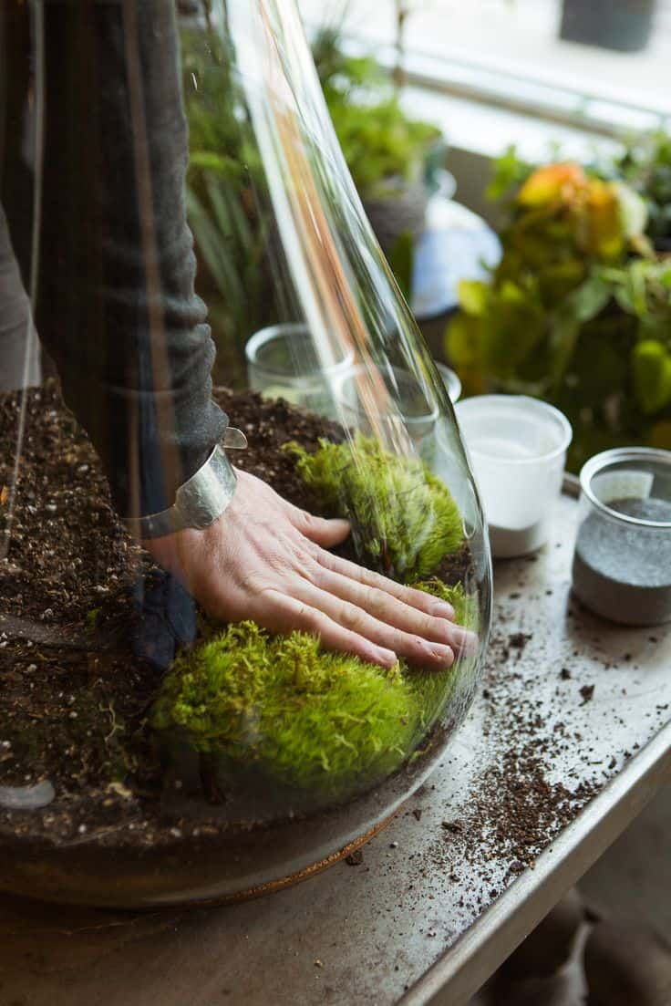 30 Awesome Indoor Garden Planting Projects To Start In The New Year (21)