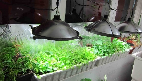 30 Awesome Indoor Garden Planting Projects To Start In The New Year (22)