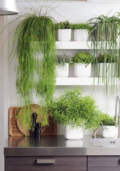 30 Awesome Indoor Garden Planting Projects To Start In The New Year (23)