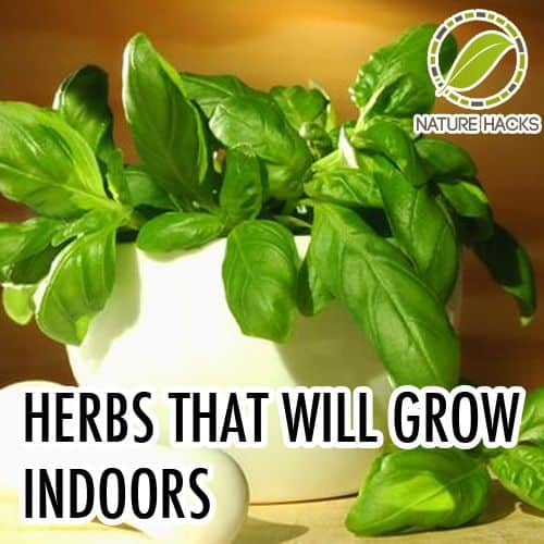 30 Awesome Indoor Garden Planting Projects To Start In The New Year (25)