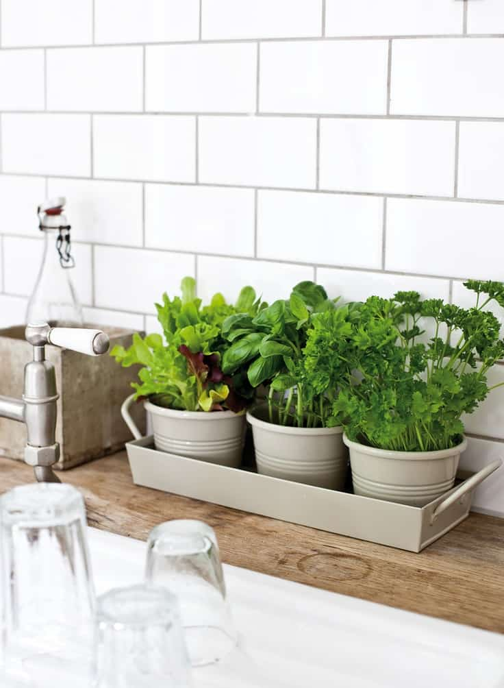 30 Awesome Indoor Garden Planting Projects To Start In The New Year (26)