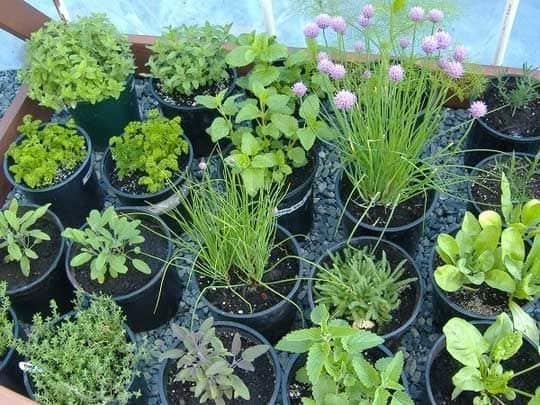 30 Awesome Indoor Garden Planting Projects To Start In The New Year (4)