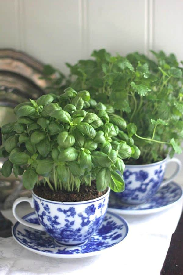30 Awesome Indoor Garden Planting Projects To Start In The New Year (7)