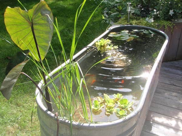 #19  USE AN OLD GALVANIZED BATHTUB TO CREATE YOUR OWN RAISED POND