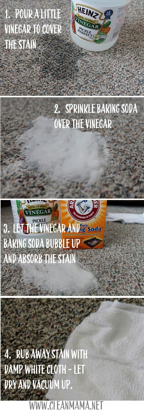 Cleaning Dog Urine From Carpet Better Homes