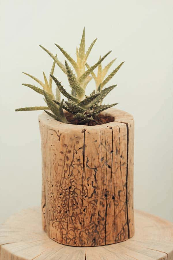 24 Beautiful Decorative Wooden Stump Vases Crafts For Your Household homesthetics crafts (11)