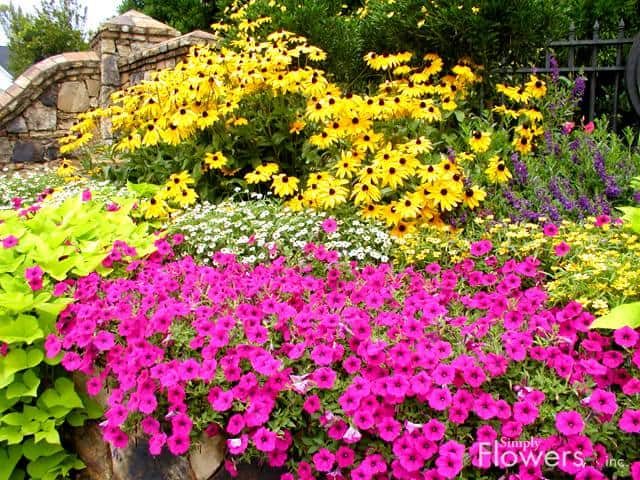 Wonderful Colorful Small Flower Garden
