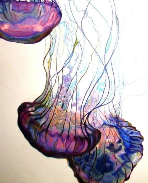 JELLY FISH IN MOVEMENT