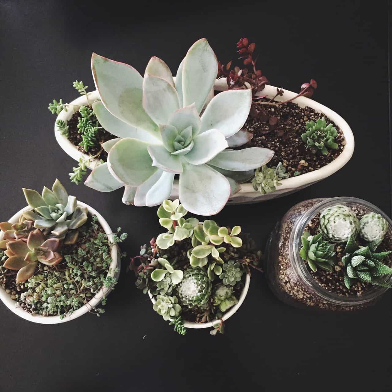 diy succulent crafts to do at home homesthetics