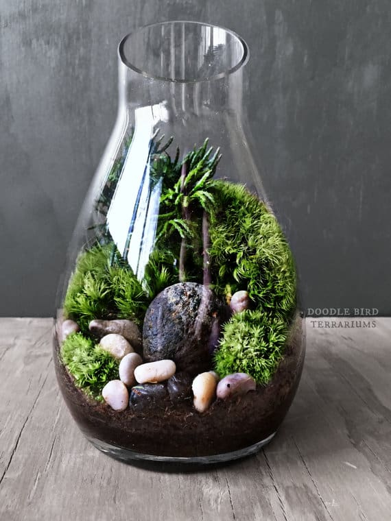 moss terrarium craft to do at home homesthetics