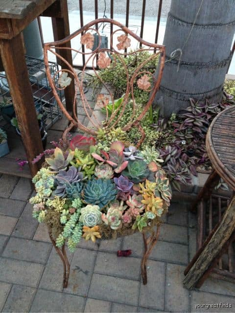 recycling old items into succulent garden homesthetics.net