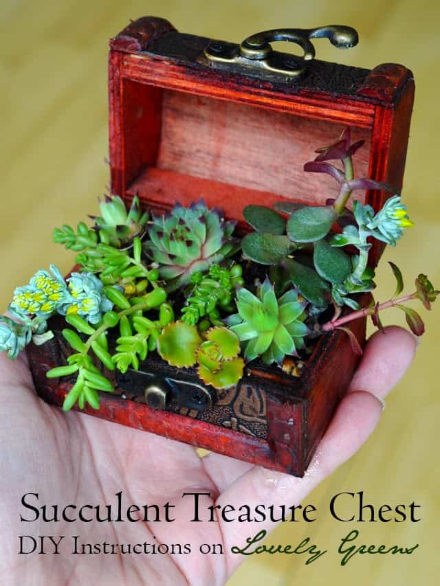succulent treasure chest craft to do at home homesthetics