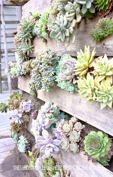 #23. THE SUCCULENT VERTICAL GARDEN