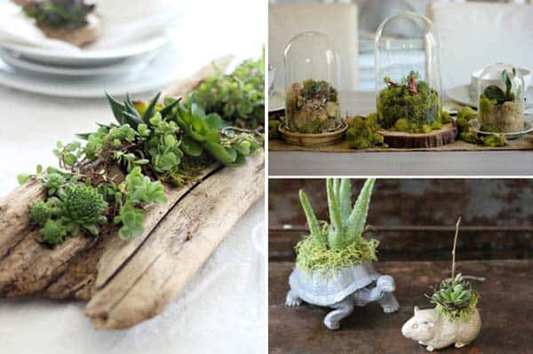 24 of The Most Beautiful Ideas on Indoor Mini Garden to Collect homesthetics (23)
