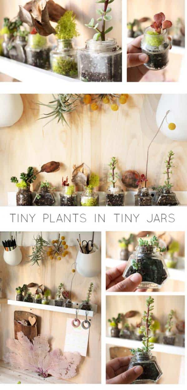 24 of The Most Beautiful Ideas on Indoor Mini Garden to Collect homesthetics (25)