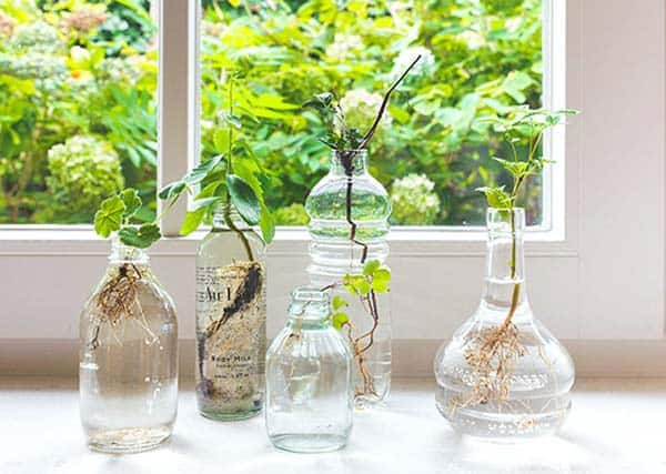 24 of The Most Beautiful Ideas on Indoor Mini Garden to Collect homesthetics (3)