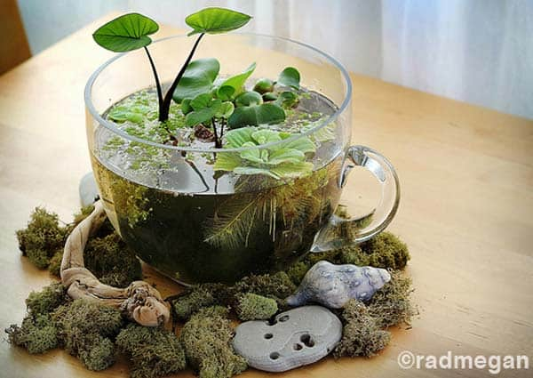 24 of The Most Beautiful Ideas on Indoor Mini Garden to Collect homesthetics (8)