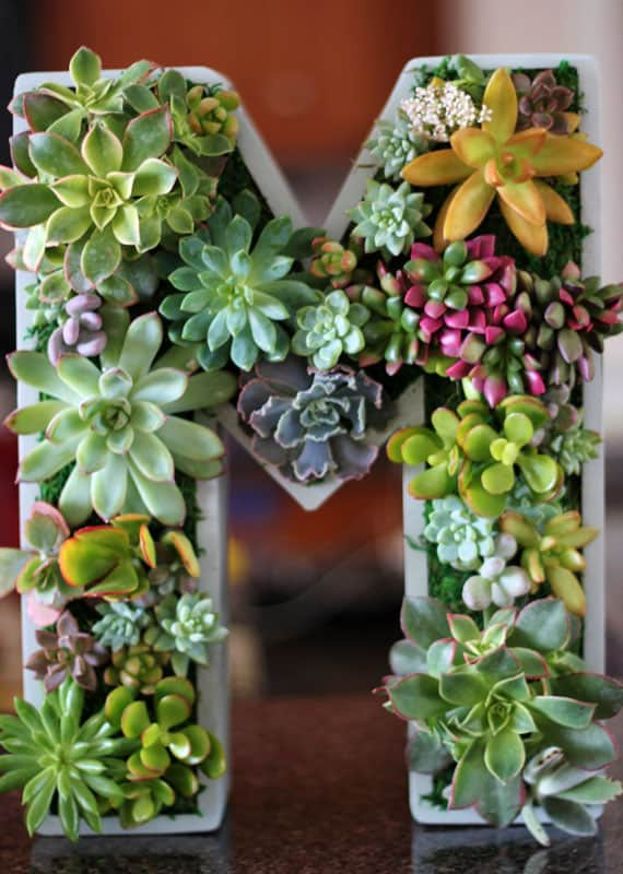Gorgeous Succulent Planters Instantly Beautifying Your Home-homesthetics (10)