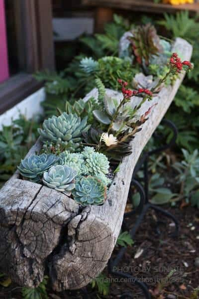 Gorgeous Succulent Planters Instantly Beautifying Your Home-homesthetics (11)