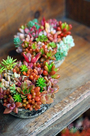 Gorgeous Succulent Planters Instantly Beautifying Your Home-homesthetics (15)