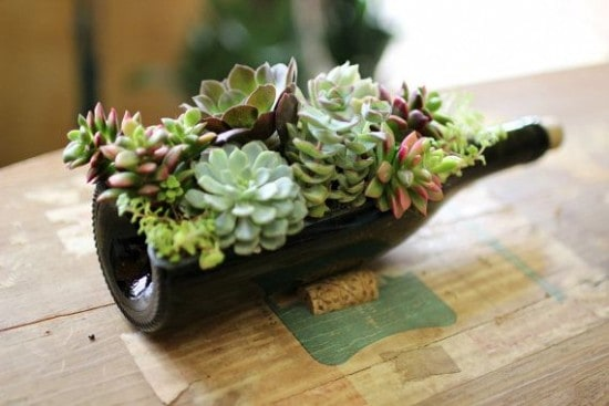 Gorgeous Succulent Planters Instantly Beautifying Your Home-homesthetics (17)