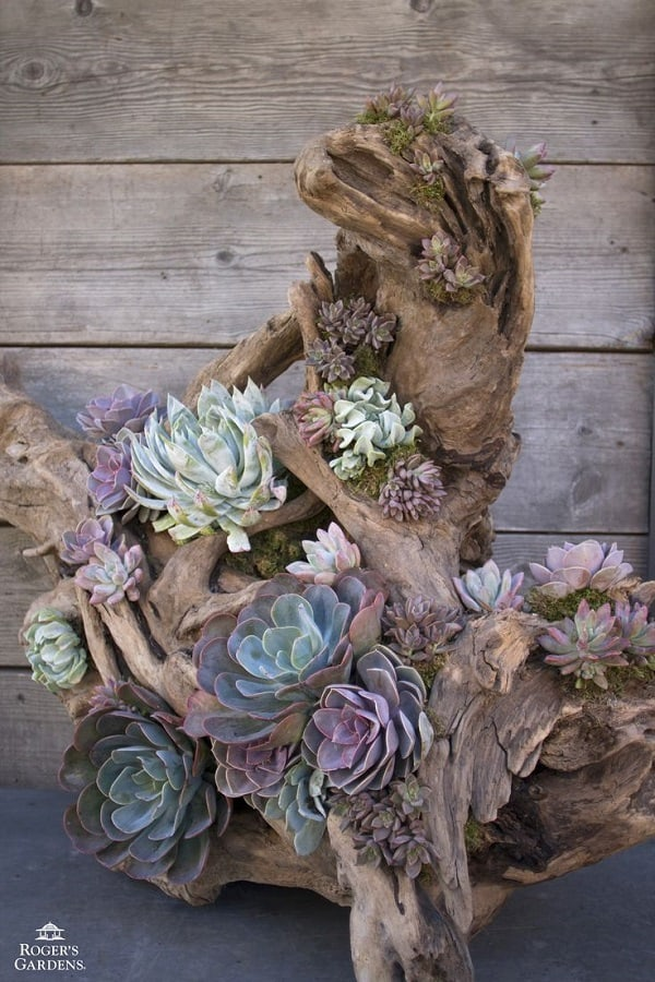 Gorgeous Succulent Planters Instantly Beautifying Your Home-homesthetics (2)
